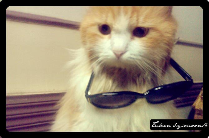 cat 21.png