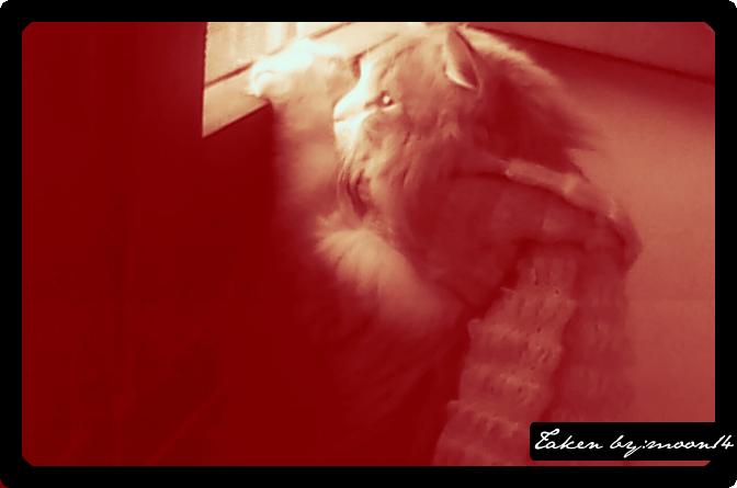cat 23.png