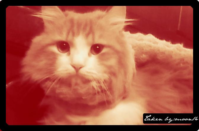 cat 24.png