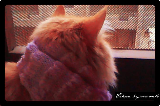 cat 25.png