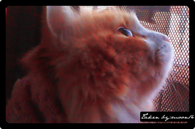 cat 26.png