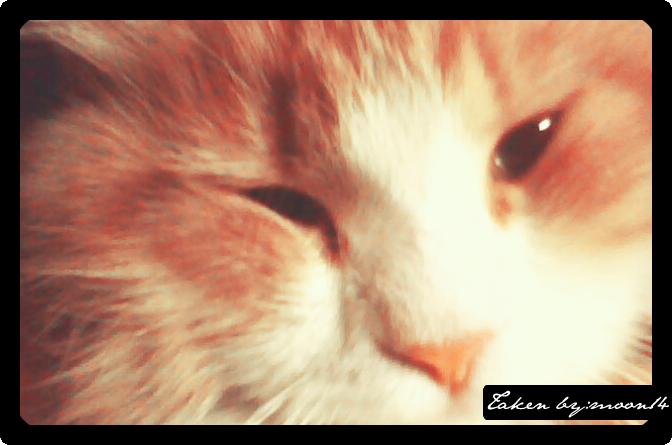 cat 27.png
