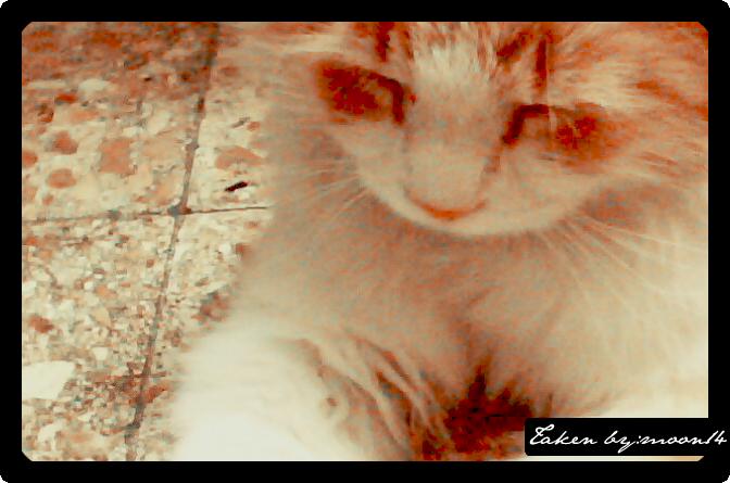 cat 28.png