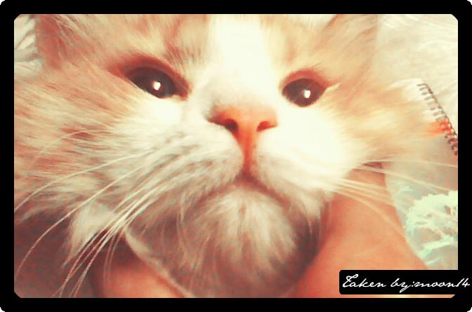 cat 29.png