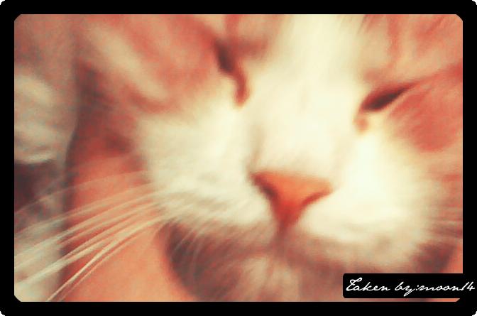 cat 30.png