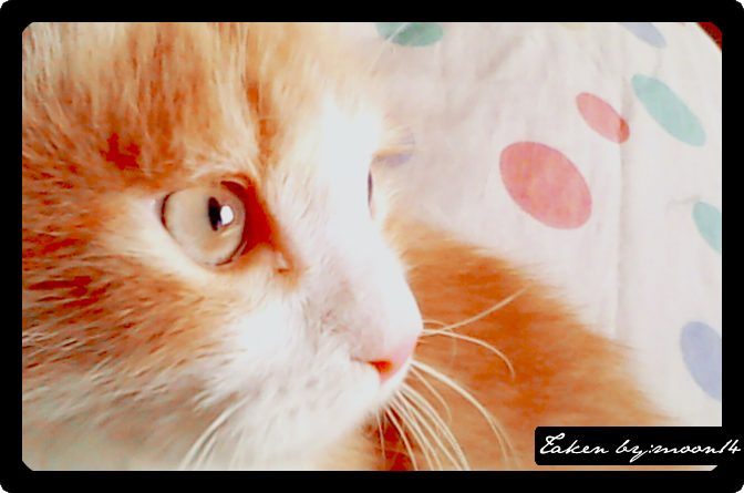 cat 31.png