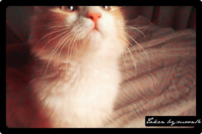 cat 32.png