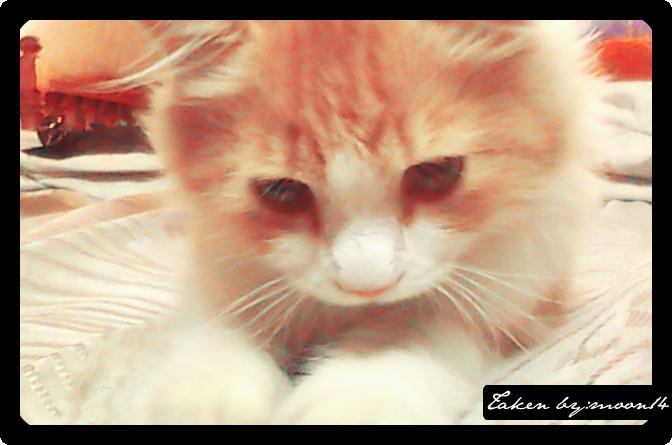 cat 33.png