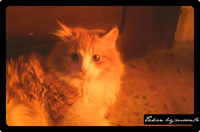 cat 35.png