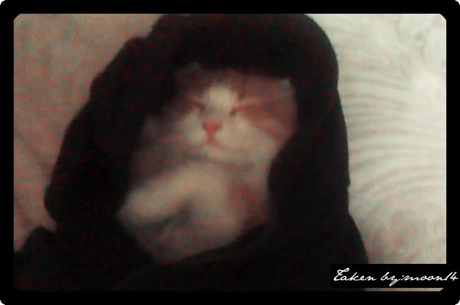 cat 37.png