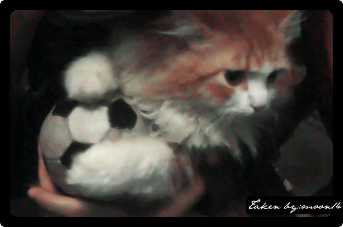 cat 38.png