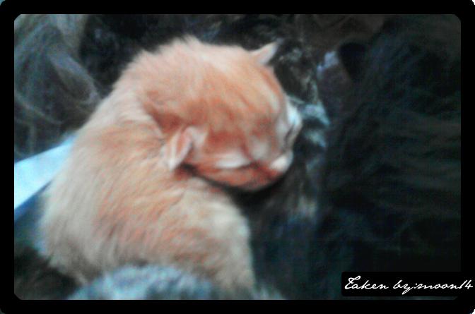 cat 22.png