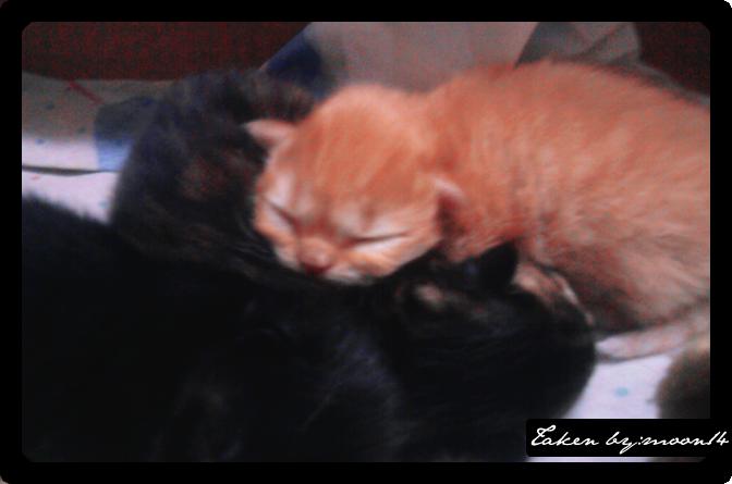 cat 20.png