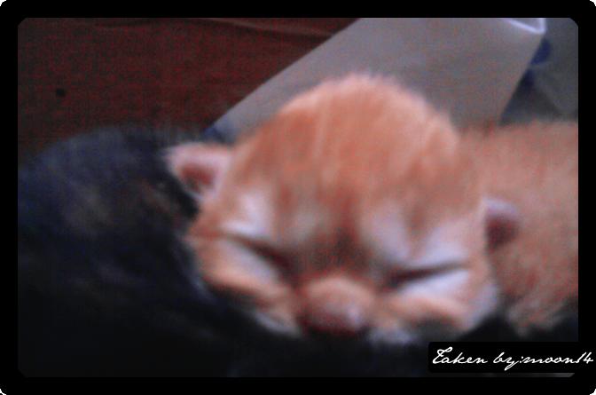 cat 19.png