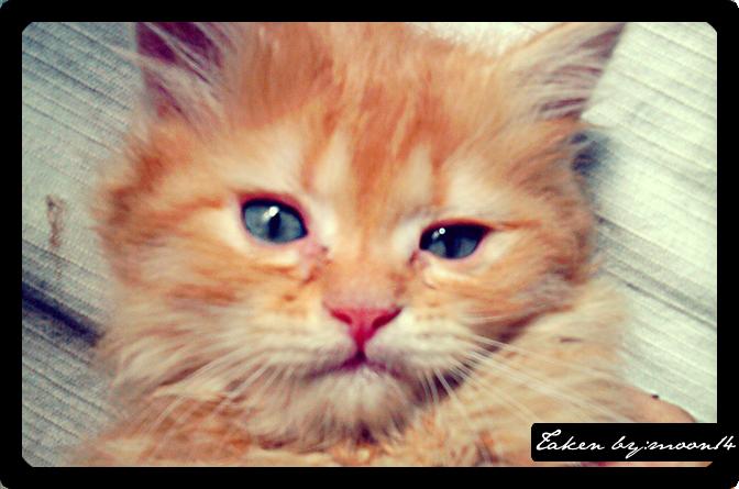cat 15.png