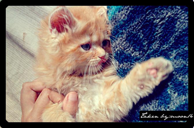 cat 16.png