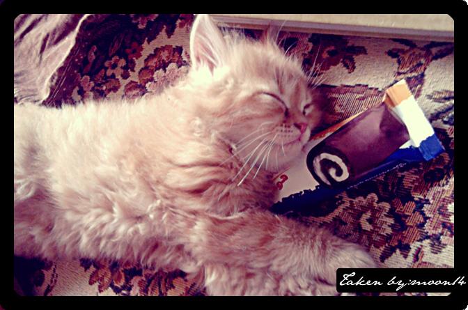 cat 17.png
