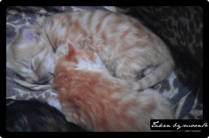cat 5.png