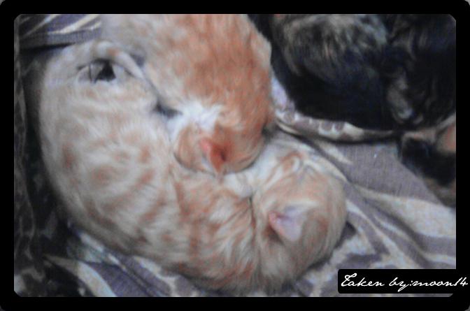 cat 6.png
