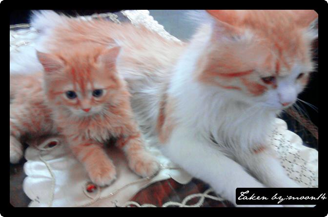 cat 8.png
