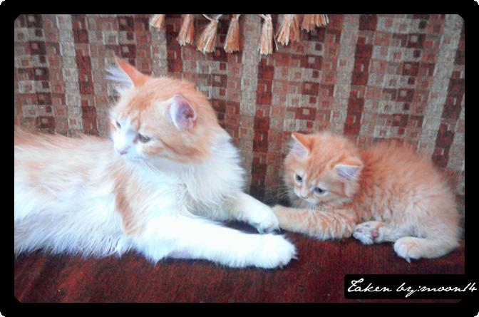 cat 9.png