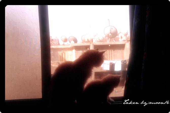 cat 10.png