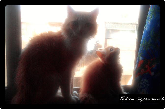 cat 11.png