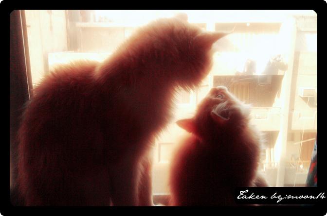 cat 12.png