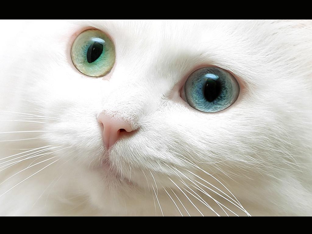 Cats020.jpg