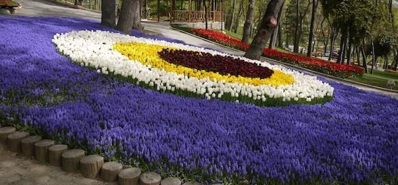 nazar-tulips-2.jpg