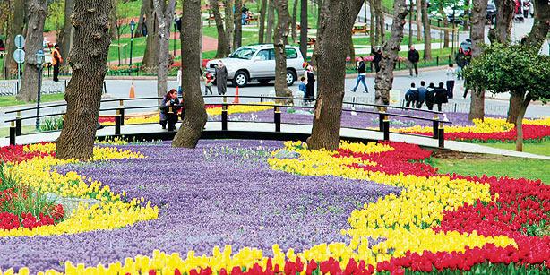 tulips-istanbul.jpg